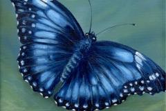 Modrý motýl- Morpho